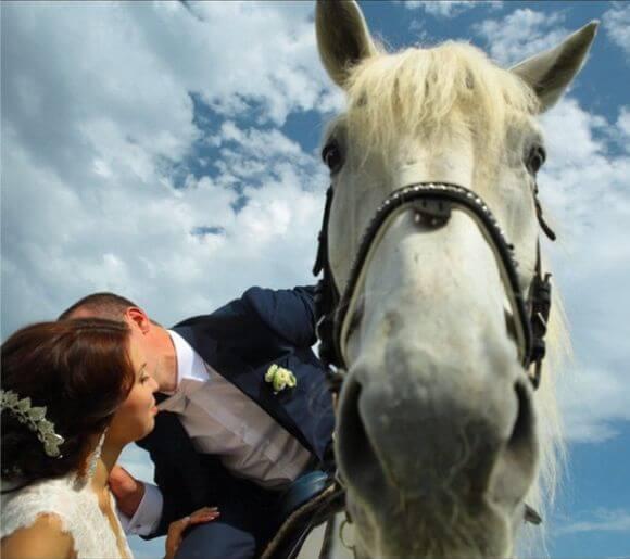 Мы с лошадкой на свадьбе